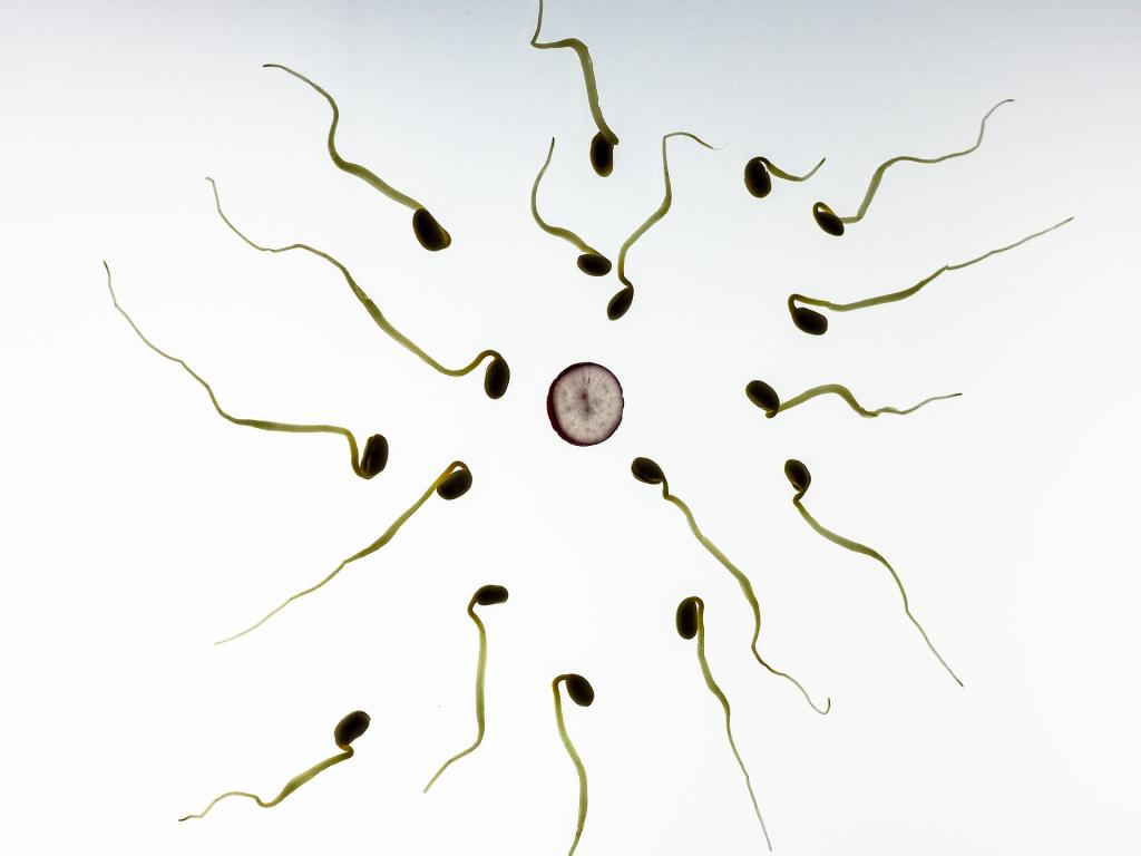 Weed on sperm