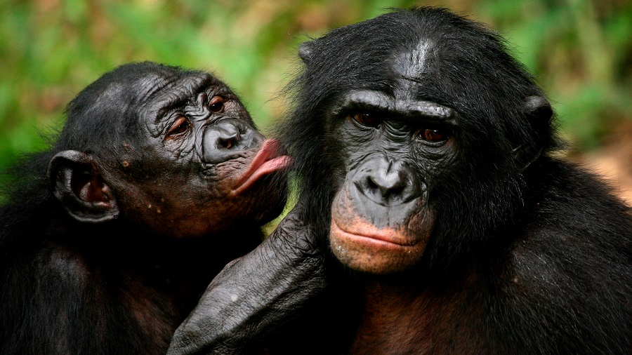 10 animals with worst mating rituals thank god you are human greet each other with a holy kiss sex m4hsunfo